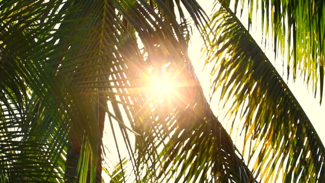 vidéos et rushes de belle lumière du soleil bokeh qui se trouve à travers les cocotiers à la plage en été - tropical