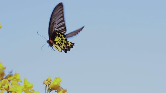 schönen schmetterling auf einer blume. sommerfeld - insekt stock-videos und b-roll-filmmaterial