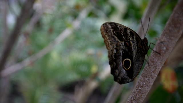 Prachtige vlinder op een boom