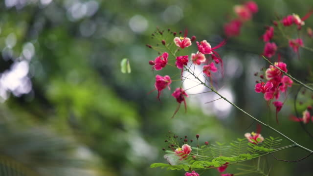 beautiful butterfly on flower in garden. - rainforest stock videos & royalty-free footage