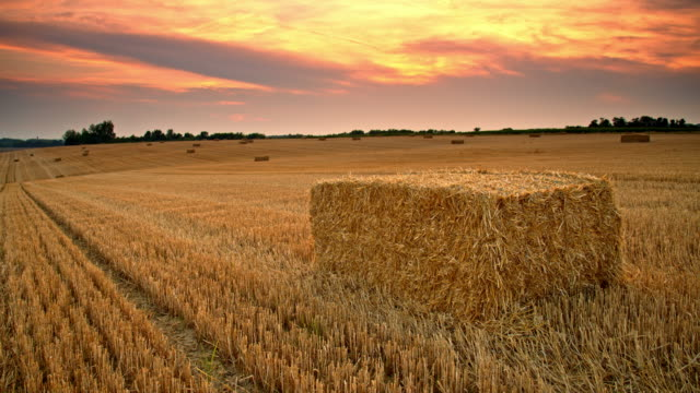 ds beautiful candid shot of wheat bales at sunset - hay bail stock videos & royalty-free footage
