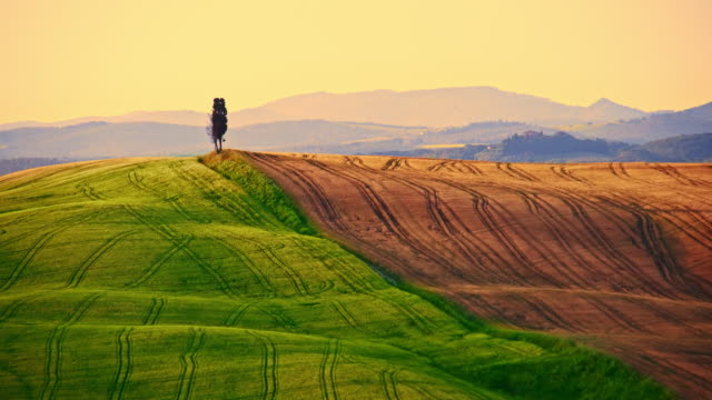 beautiful candid wheat fields in tuscany - tuscany stock videos and b-roll footage