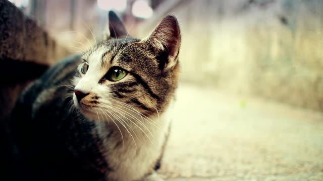 Vacker katt från Istanbul gator