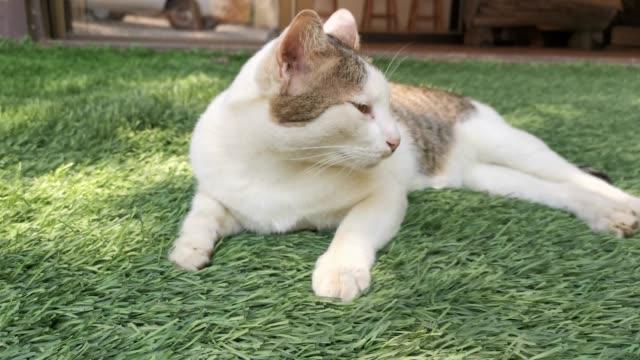 vídeos y material grabado en eventos de stock de hierba de gato hermoso se ve linda en el piso. - vibrisas