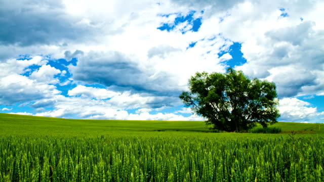 HD TIME LAPSE: Beautiful Cloudscape Over Countryside