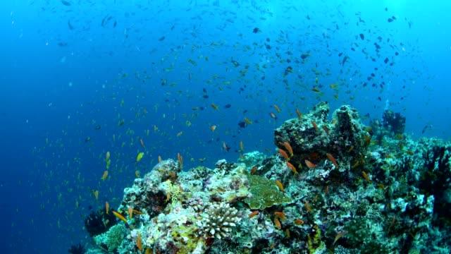 vídeos y material grabado en eventos de stock de beautiful colorful coral reef and tropical fish underwater in maldives - esponja