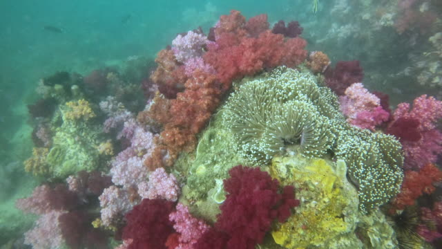 beautiful colourful of coral reef underwater - sea anemone stock videos & royalty-free footage