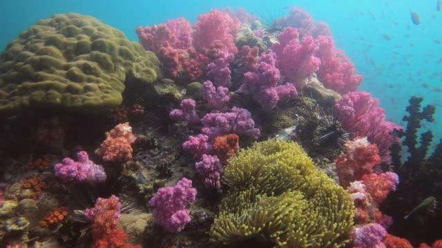 水中サンゴ礁の美しいカラフルな - ソフトコーラル点の映像素材/bロール