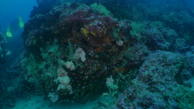 vídeos y material grabado en eventos de stock de agua fría hermoso arrecife de coral submarinos, galápagos - esponja