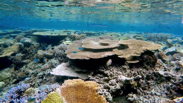beautiful coral reef on maldives - south ari atoll - ari atoll stock videos & royalty-free footage