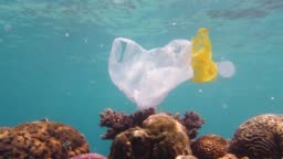 Beautiful coral reef polluted with plastic bag