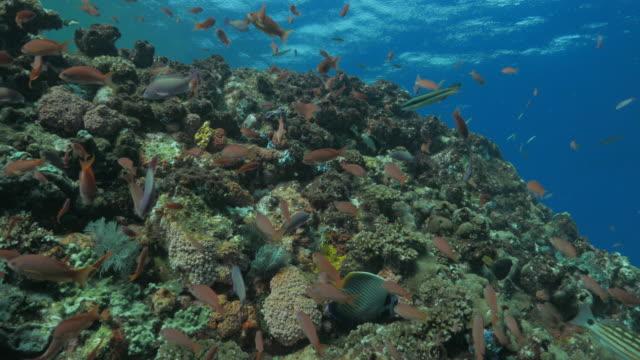 vídeos de stock, filmes e b-roll de linda de recifes de corais, mar tropical - ponto de vista de mergulhador