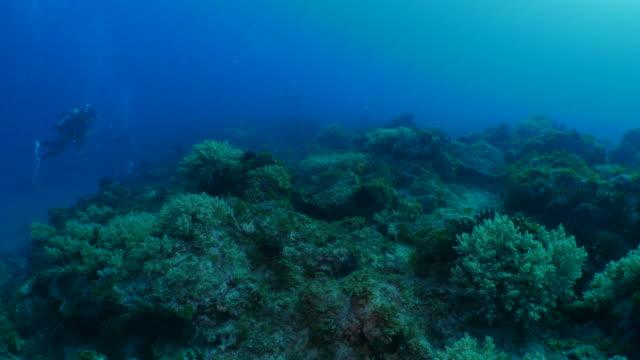 Beautiful coral reef undersea, Taiwan