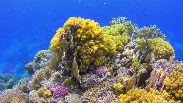 Beautiful Coral reef with colorful fish on Red Sea