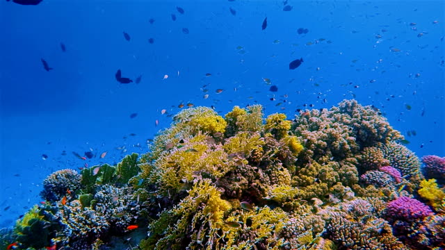 Beautiful coral reef with lot of tropical Fish on Red Sea nearby Marsa Alam