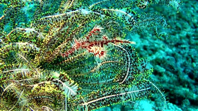 vídeos de stock, filmes e b-roll de hd: bela de corais - vida no mar