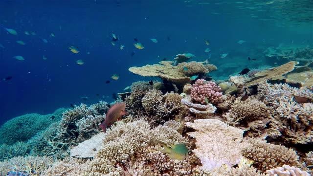 beautiful corals on reef / maldives / south ari atoll - ari atoll stock videos & royalty-free footage