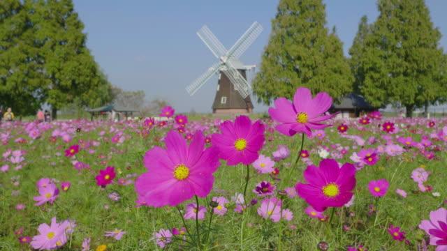 beautiful cosmos and windmill in autumn - satoyama scenery stock videos & royalty-free footage