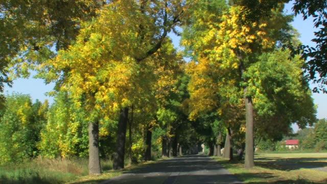 Herrliche ländliche Straße im Herbst