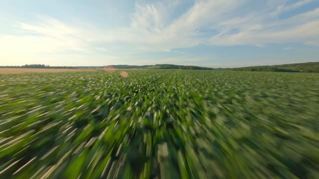 vídeos y material grabado en eventos de stock de aerial hermoso campo con campos de maíz y trigo en día soleado - monocultivo