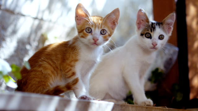 beautiful curious kittens - two animals stock videos & royalty-free footage