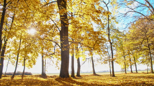 slo mo beautiful deciduous trees in fall colors - treetop stock videos & royalty-free footage