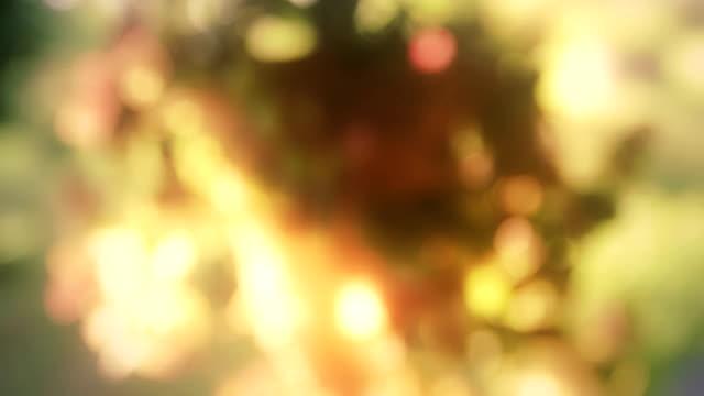 vídeos de stock, filmes e b-roll de bela defocused flores - desfocado foco
