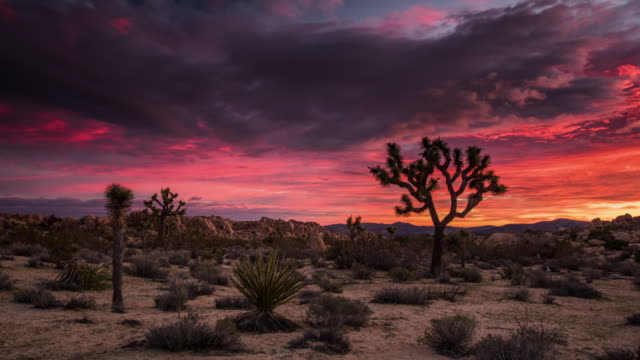 time lapse: beautiful desert sunrise at joshua tree national park - joshua tree stock videos and b-roll footage