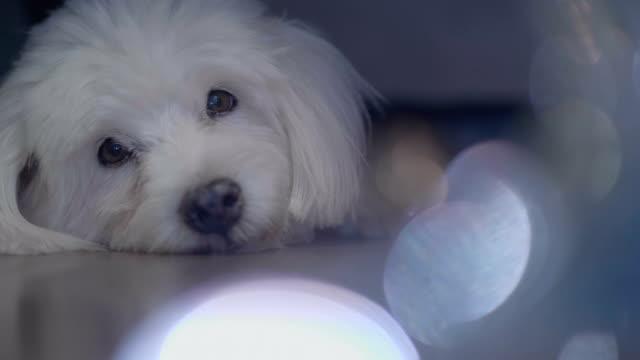beautiful dog is feeling alone - animal head stock videos & royalty-free footage