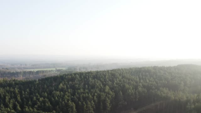 beautiful drone shot of misty forest - surrey england stock videos & royalty-free footage