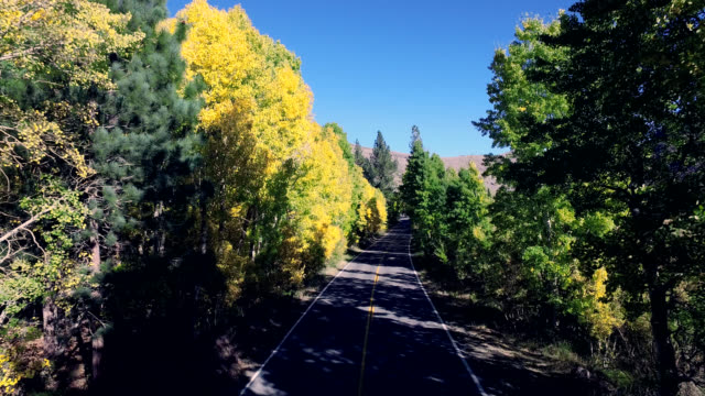 Beautiful drone shot tracking along a lonesome road in the California mountains as the trees are changing colors.