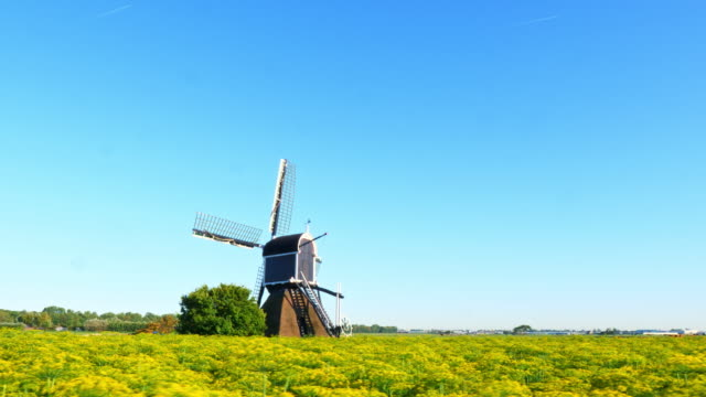 beautiful dutch windmills and dill - netherlands stock videos & royalty-free footage