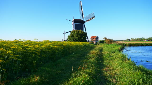 beautiful dutch windmills and dill - meadow stock videos & royalty-free footage