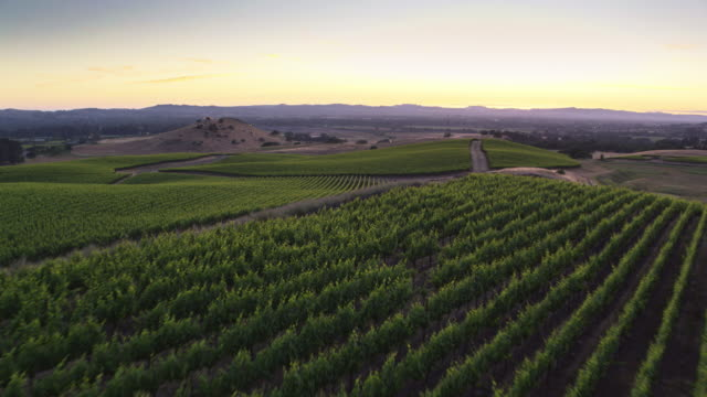 Beautiful Evening in California Wine Country - Drone Shot