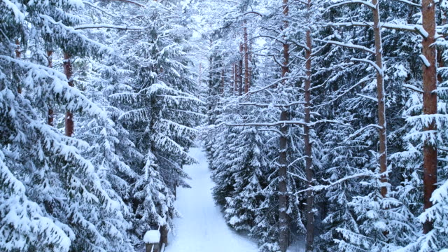 beautiful fabulous winter forest landscape with a road near the fence in the snow. - deep snow stock videos & royalty-free footage
