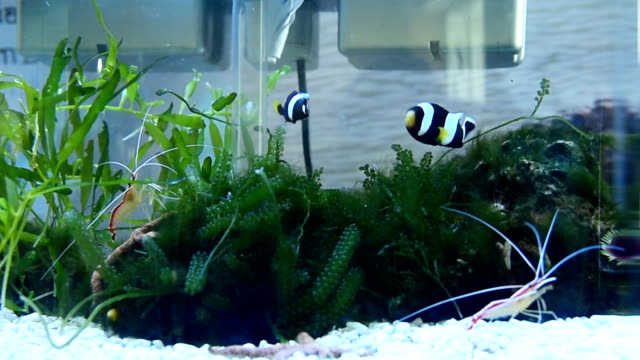 beautiful fish and shrimp - aquarium stock videos & royalty-free footage