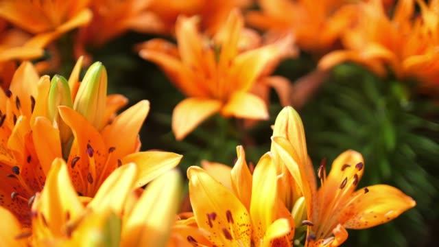 vidéos et rushes de belle fleur en thaïlande - composition florale