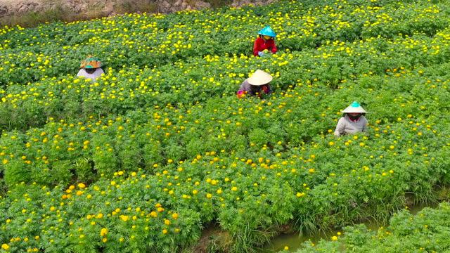 vidéos et rushes de beautiful flower village aerial view - sa dec flower village - vietnamese culture - fête religieuse