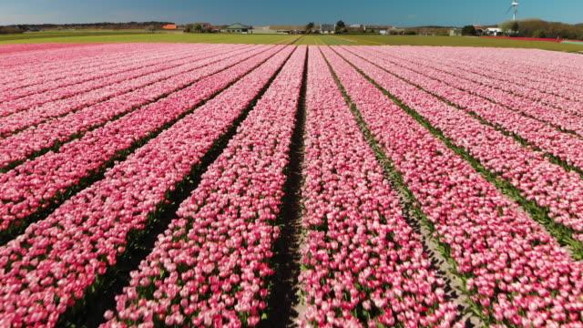 vídeos y material grabado en eventos de stock de hermosos macizos de flores en los países bajos - países bajos
