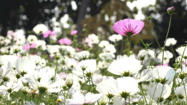 beautiful flowers blooming