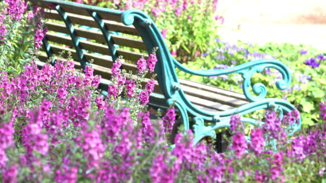 beautiful flowers garden with vintage bench