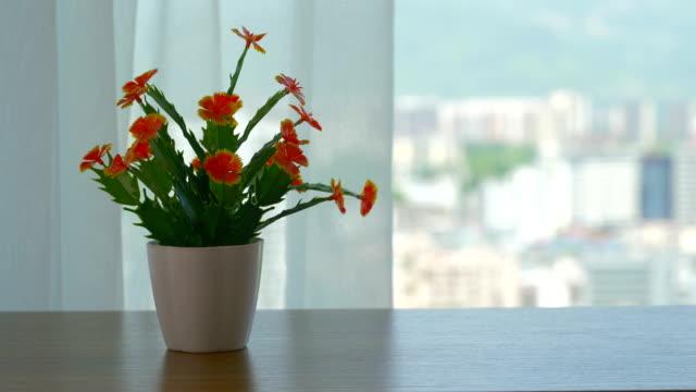 部屋の窓の前の美しい花 - 花瓶点の映像素材/bロール