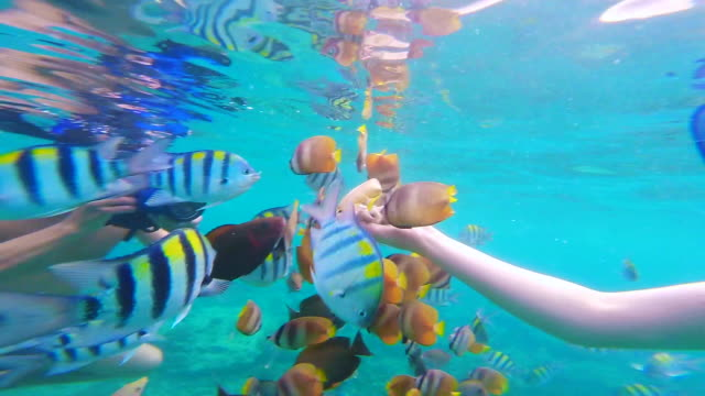 Beautiful footage of girl doing snorkel feeding group of fishes in the paradise Gili islands during travel vacations in Indonesia.