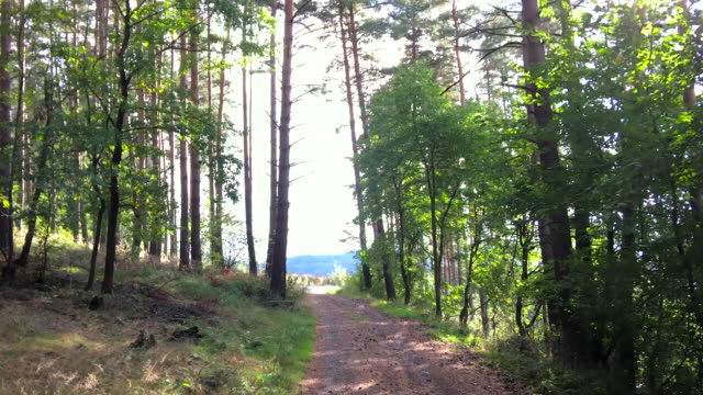 beautiful forest path & sunbeams - earth goddess stock videos & royalty-free footage
