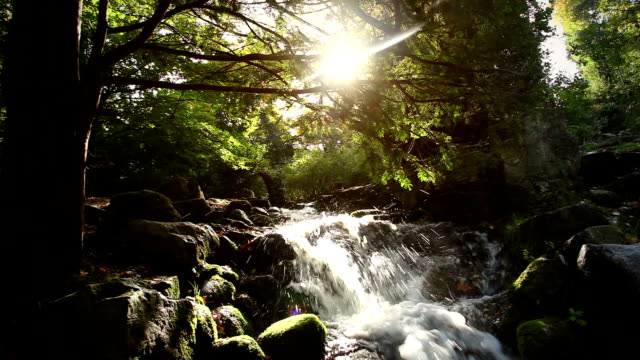 beautiful forest river waterfall + audio - boulder rock stock videos and b-roll footage