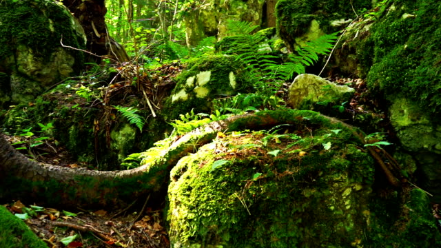 beautiful forest - moss stock videos & royalty-free footage