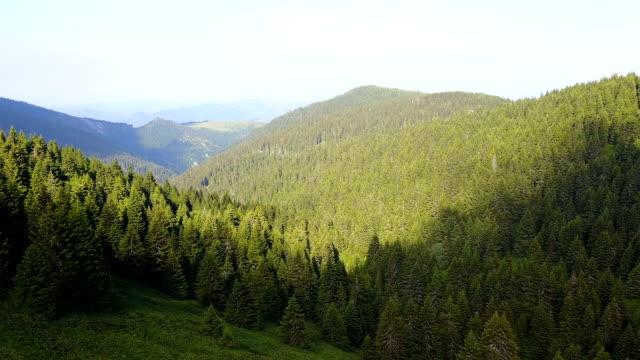Wunderschönen forest