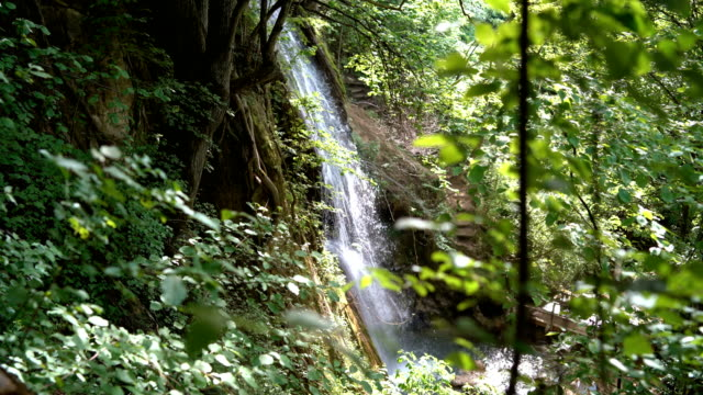 beautiful forest waterfall - purezza video stock e b–roll