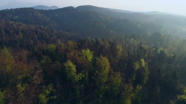 beautiful forests of slovenia - woodland stock videos & royalty-free footage