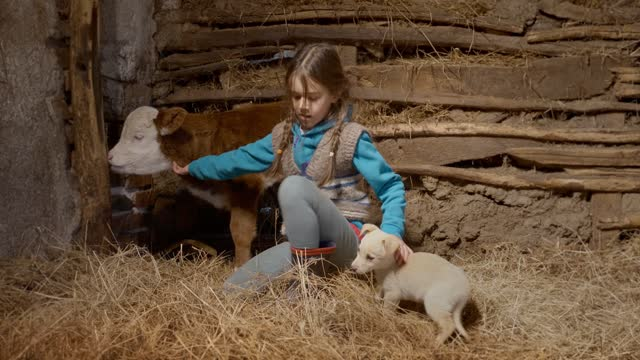 beautiful girl patting calf an dog, puppy in a bed of hay in a stable on a farm - calf stock videos & royalty-free footage